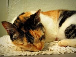 Miau sleeping