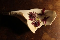 Shell and Flower #1