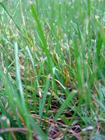 grass1blog.jpg
