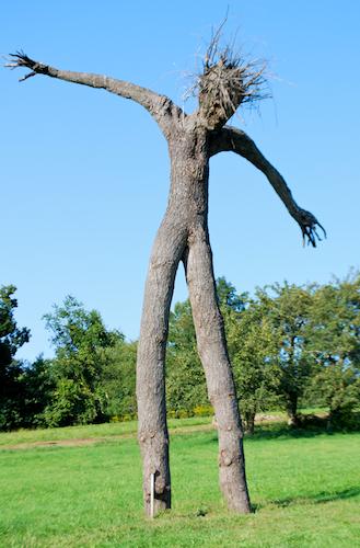 Pine Man