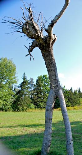 Predator Tree