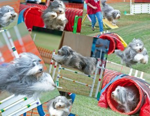 Shebang Agility Collage