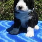 Sadie 5 weeks