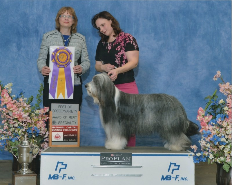 Scarlett BOB NCBCC 2015 Thanks to breeder-judge, Yvonne Fox (Bushblades)