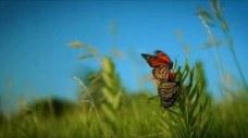 pollination 07