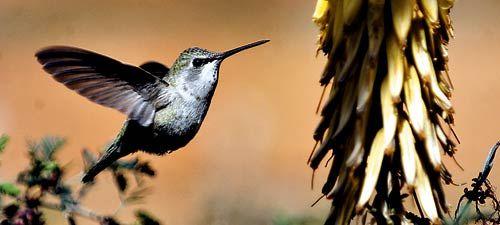 pollination 10