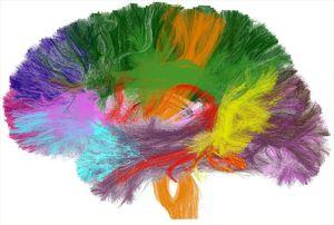 cerveaucouleur