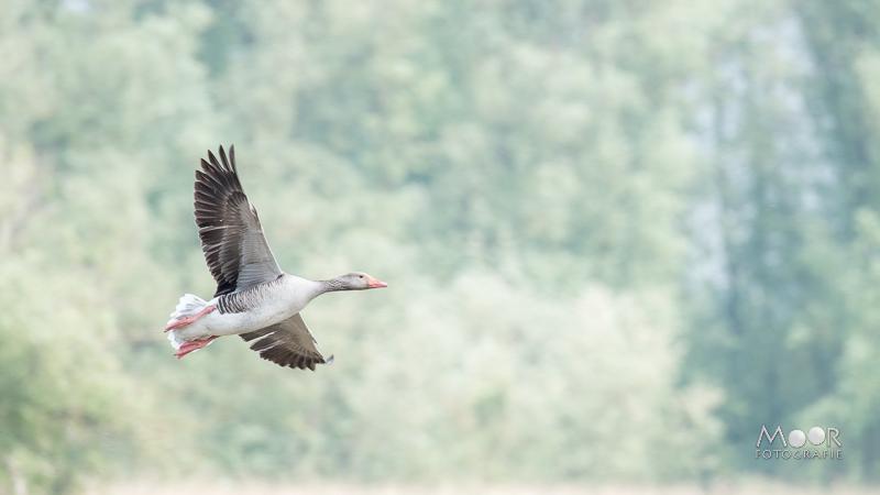 Gemakkelijke Missers in de Natuurfotografie