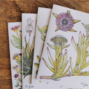 CoralBloom Greeting Card Set of Four Succule