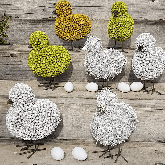 Seed Chickens