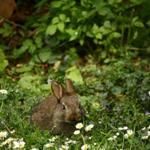 batch_animal-cute-field-1074644