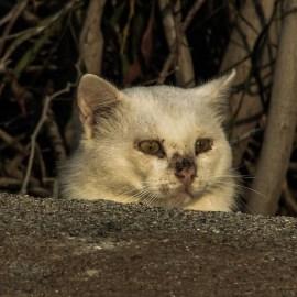 batch_cat-1753874_1920