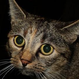 batch_cat-223244_1920