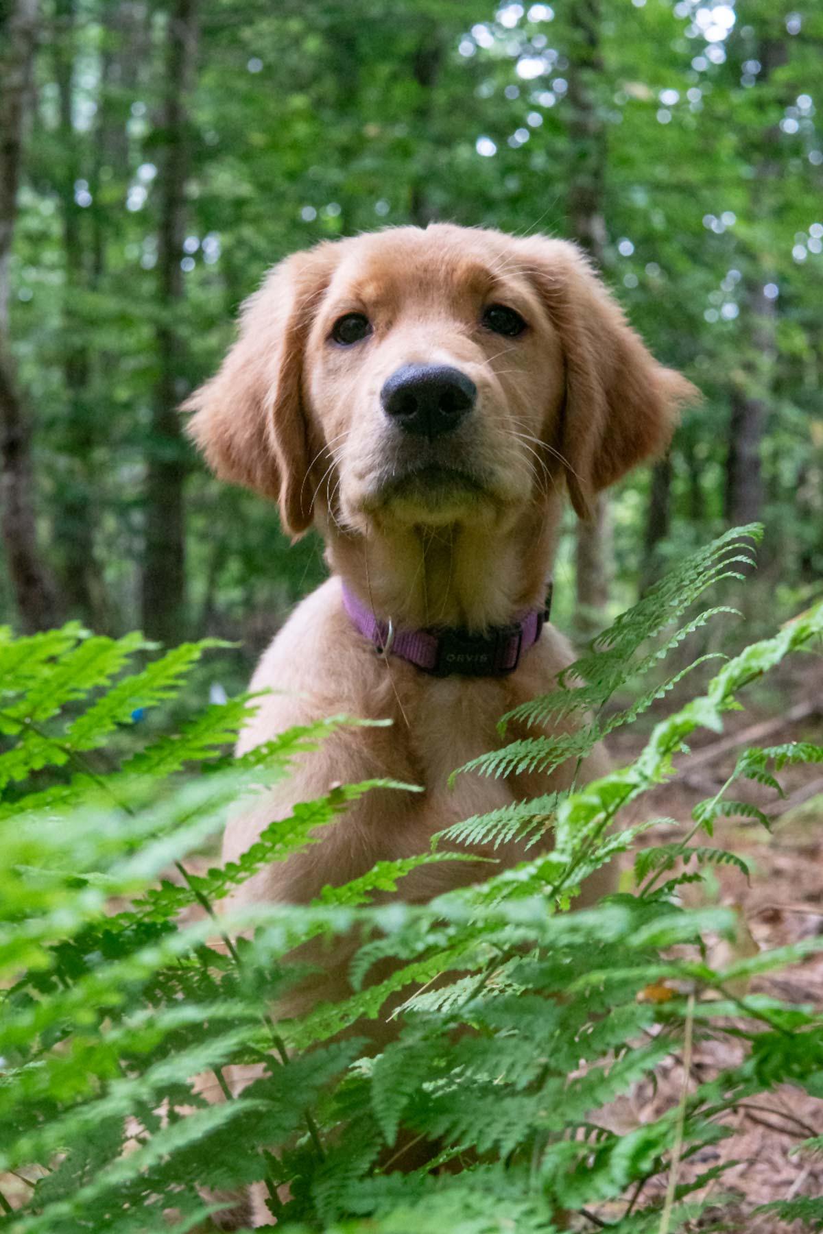 mocha moose in the ferns
