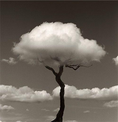 arbol nube chema madoz