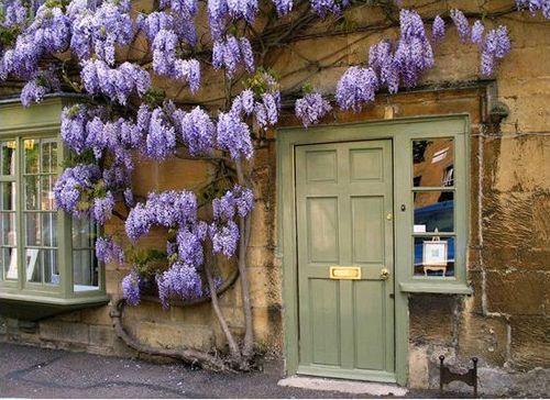 flores violetas puerta verde casasugar