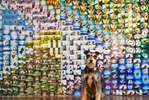 mural fotografias lomograficas srperr.com