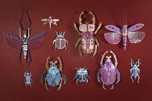 cabinet curiosites insectos