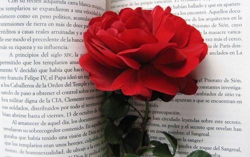 libro rosa sant jordi 2013 entremislibrosyo.blogspot.com