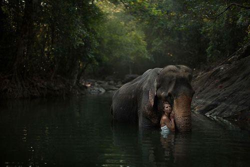 como agua para elefantes