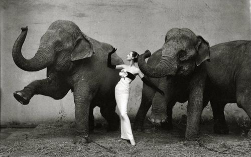 fotografia de moda con elefantes