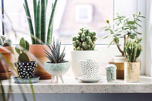 Decorar con plantas verdes: algunas ideas