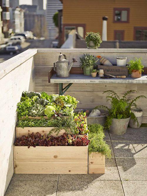 Huertos urbanos: ecológicos y económicos
