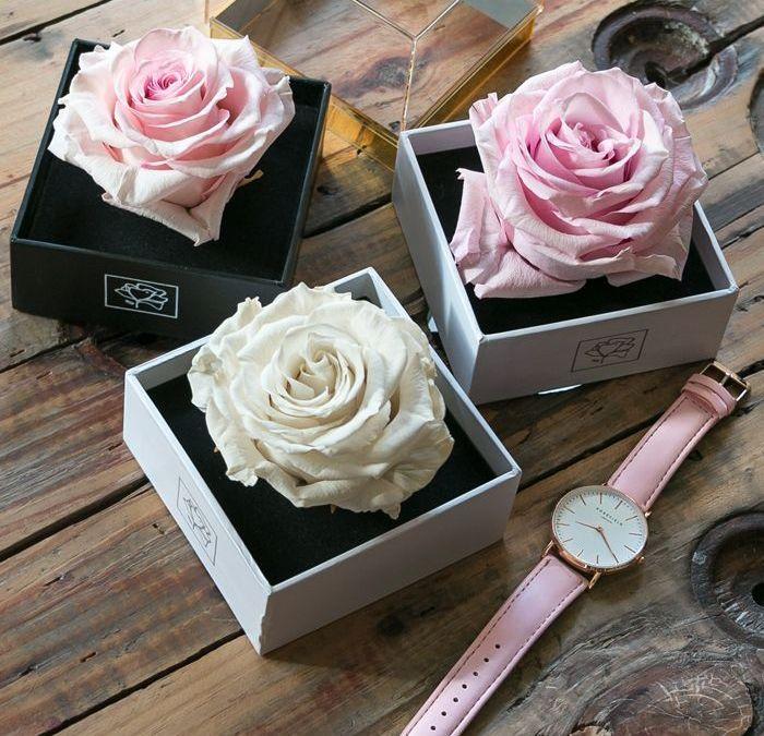 Rosas preservadas, flores como frescas durante más de un año