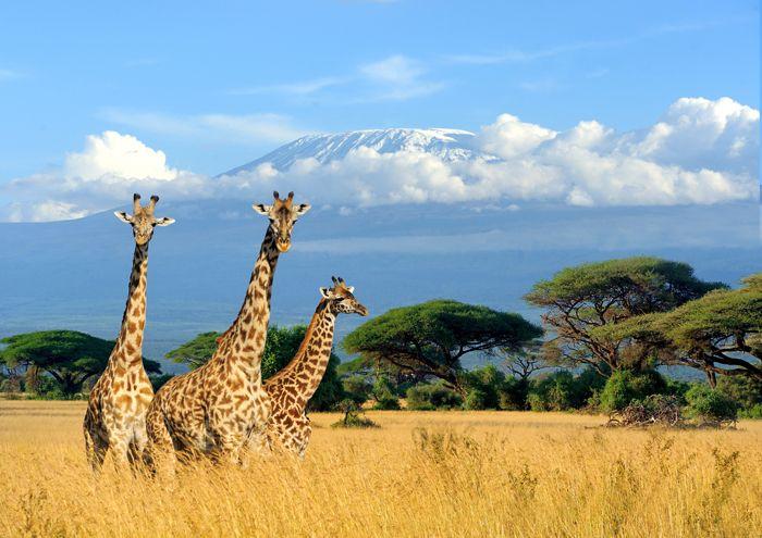 Elige qué continente prefieres y reserva ya tus vacaciones 2019