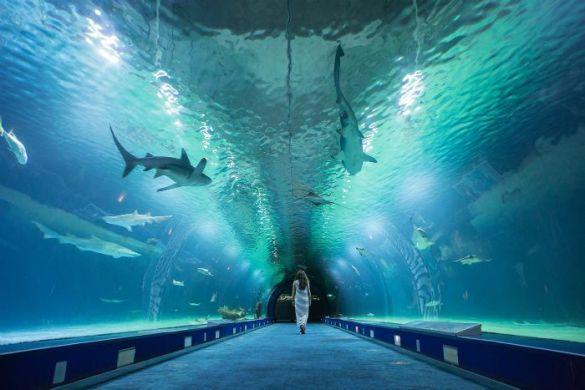 tunel acuario mujer