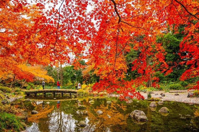 Jardin botanico de tokio en otoño