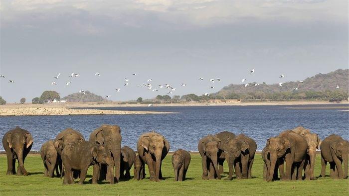 Parque Nacional en Sri Lanka