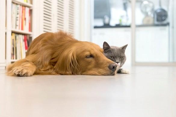 aspiradores casa mascotas