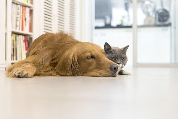 Mascotas en casa: consejos para tener tu casa limpia y ordenada