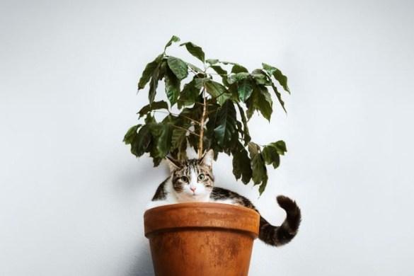 Maceta con planta y un gato de mascota
