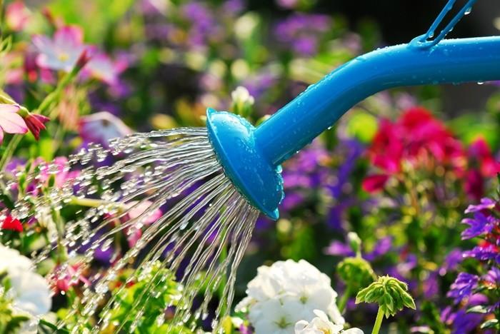 regadera agua flores colores