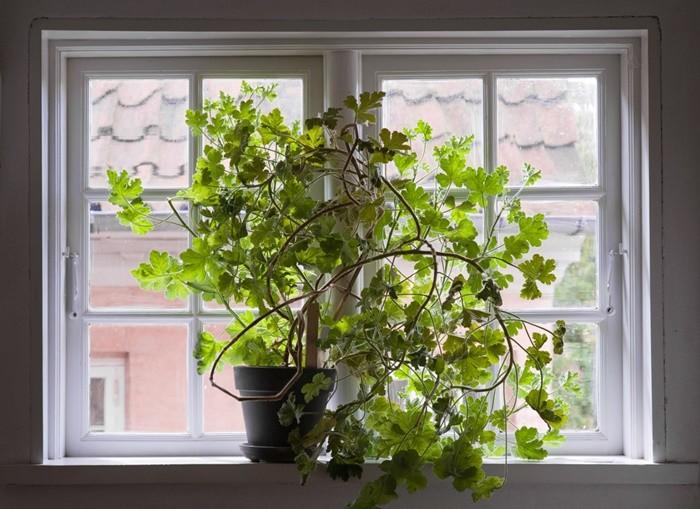 ventana planta poto hojas ramas