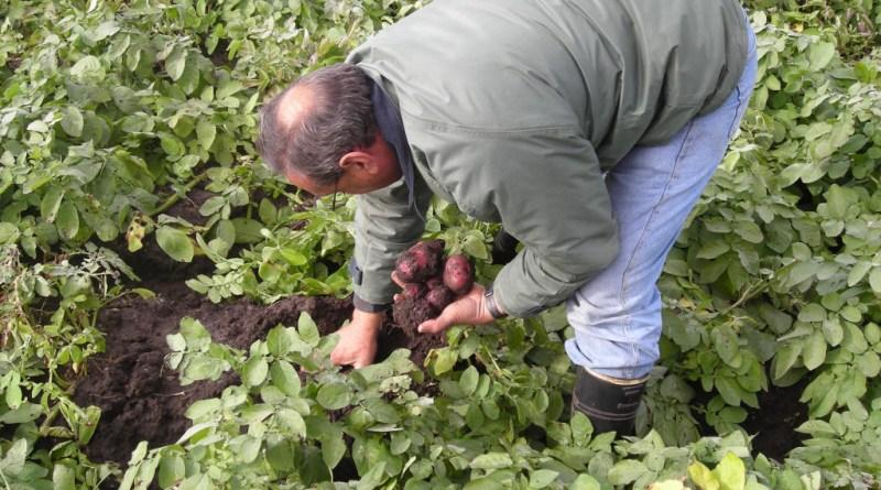 DIGEGRA convoca a presentar Planes de Negocios para Industrialización de Frutas y Hortalizas