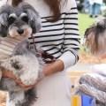 全国からMシュナが集結!!第二回【髭犬祭 2016】一年ぶりの大集合に歓喜!