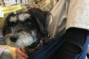 髭犬祭2017 モラキジドッグ