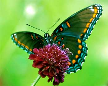 Butterfly Struggle Story - Inspirational Stories for Life