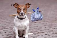 Funny Moral Stories Human Characters - Expectations Dog Short Stories