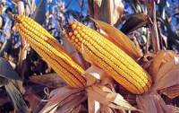 Sharing Short Stories - Farmer Best Moral Stories