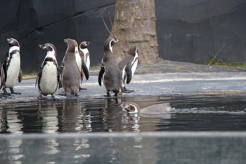 Morandmors_Zoo de Vincennes _4