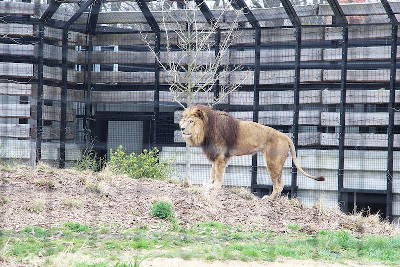 Morandmors_Zoo de Vincennes _5