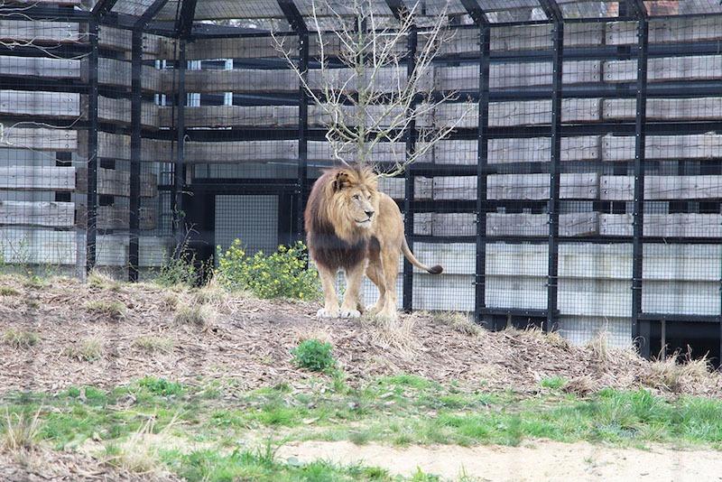 Morandmors_Zoo de Vincennes _6