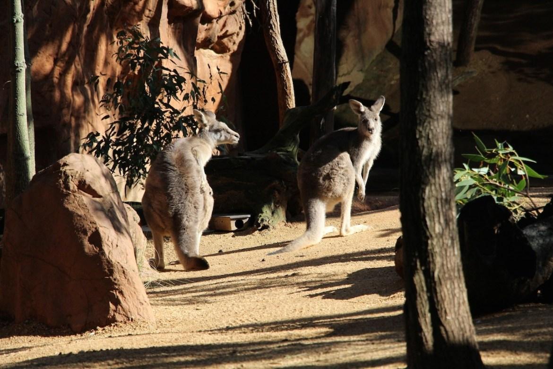 Australie-sydney_morsblog 1