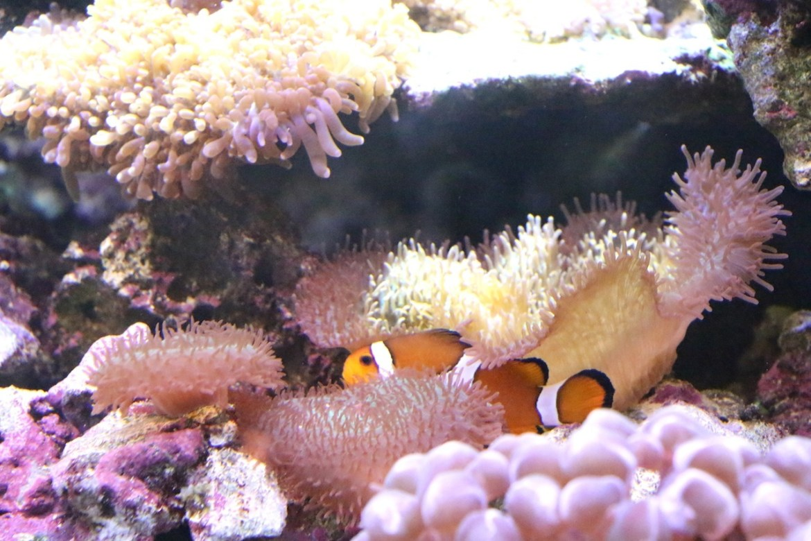 Aquariumportedoree-paris_morsblog 10