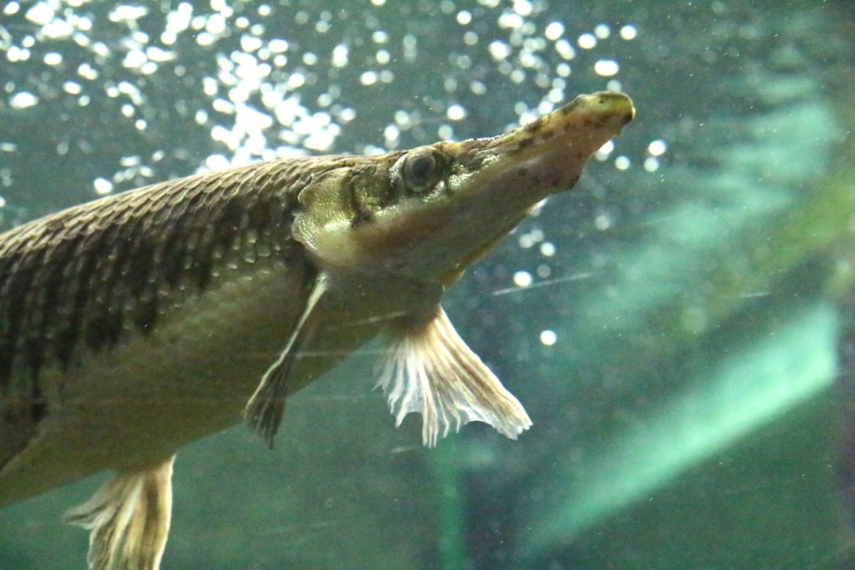 Aquariumportedoree-paris_morsblog 2