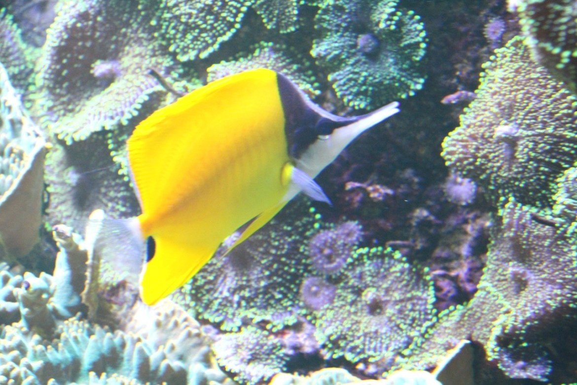 Aquariumportedoree-paris_morsblog 8